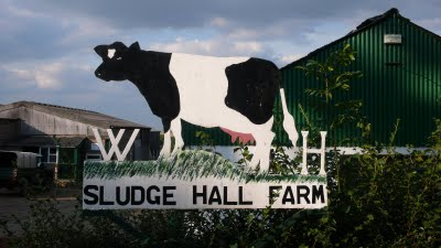 Blog Sludge Hall Cow