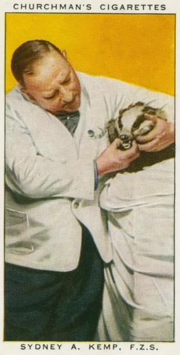 badger dentist