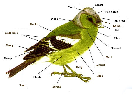Bird.parts