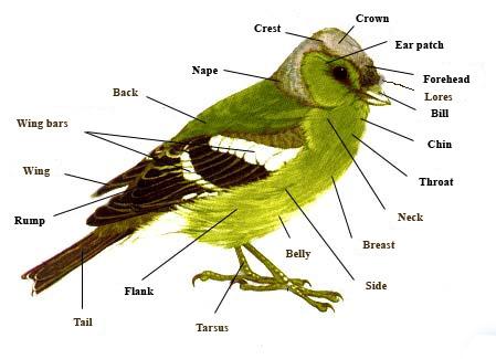 Bird.parts
