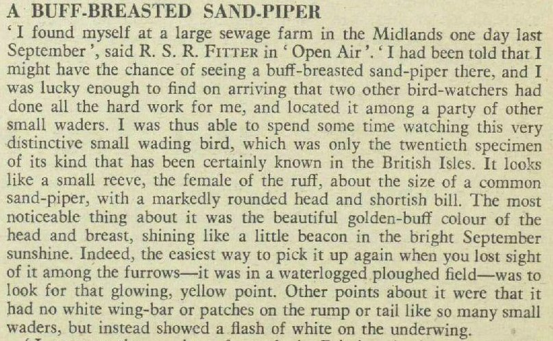 sandpiper1