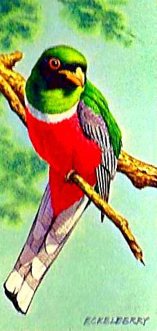 Bird 128
