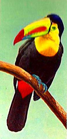 Bird 129