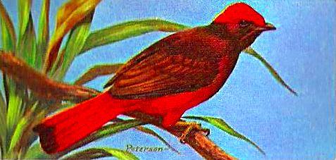 Bird 133