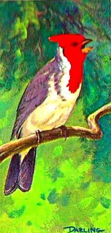 Bird 134