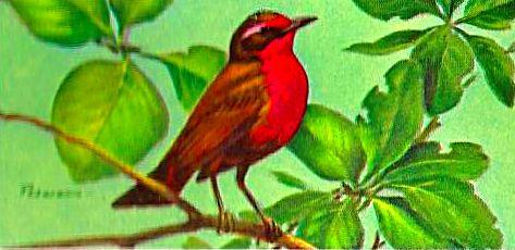 Bird 135