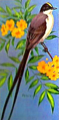 Bird 136