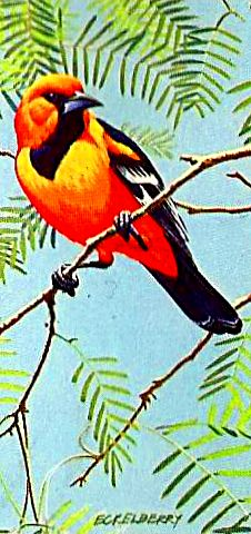 Bird 137