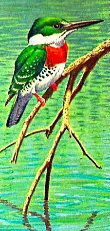 Bird 138