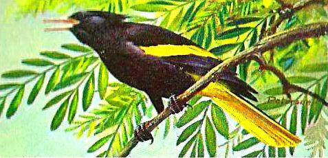 Bird 140