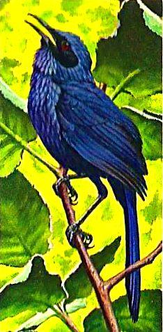Bird 141