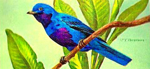 Bird 142