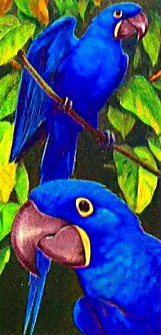 Bird 143